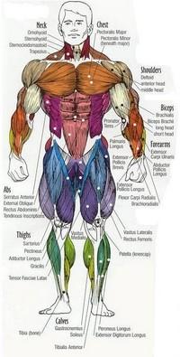 durability body